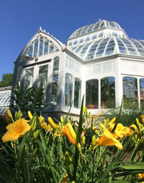 a greenhouse with flowers in the foreground