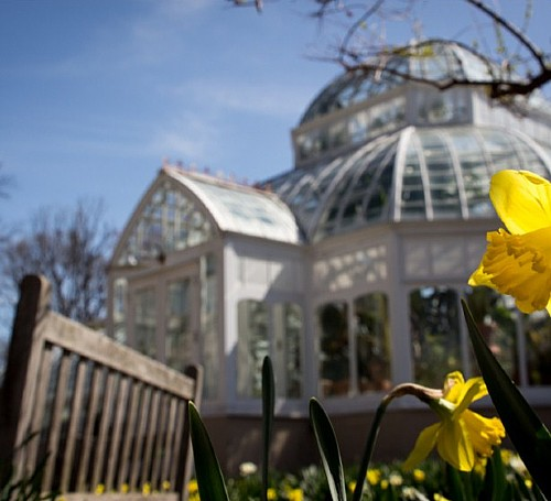 Coffee and Culture: Clayton and Pittsburgh's Gilded Age Conservatories
